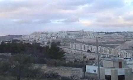 Israeli settlements built on site of pine forest